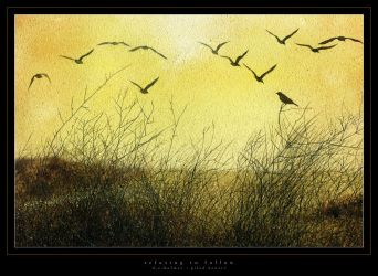 refusing to follow by dholms