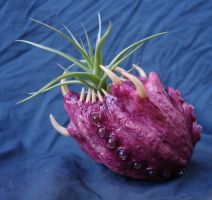 air plant beast by dogzillalives