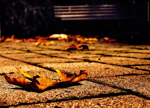 Beginning of the fall by sara-nmt