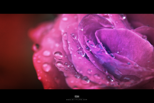 Flower by 911OFFICIAL