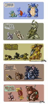 Squirtle Family Variants by athelo
