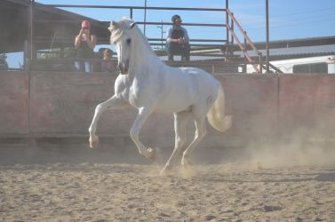 DWP FREE HORSE STOCK 242 by DancesWithPonies