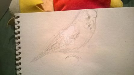 Budgie (sketch) by Dragonspice101