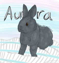 Aurora // CS Contest by monochromelives