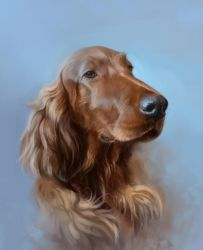 Irish setter by SalamanDra-S
