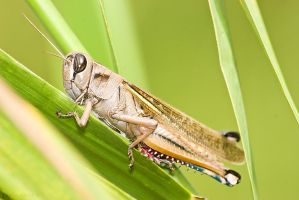 A Simple grass hopper by geostant