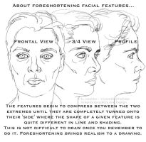 Facial Feature Perspective by 12monthsOFwinter