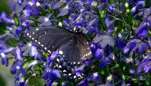 Butterfly and small flowers by gintautegitte69