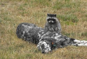 A Racoon's Protector III by Photos-By-Michelle