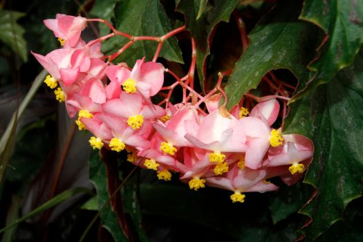 Pink an Yellow by tonysphotos