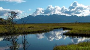 MY BLISS NATIONAL WILDLIFE REFUGE by 1arcticfox