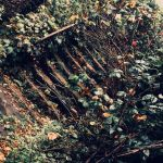 As Leaves on the Stone Steps  by Dementeris-San