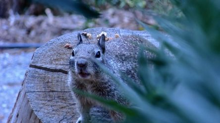 Stand your ground... Squirrel by Squirrels2poet2queen