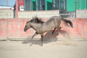 DWP FREE HORSE STOCK 274 by DancesWithPonies