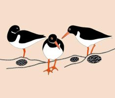 Three Oystercatchers by TootieFalootie