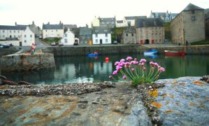 Harbour wall thrift by Blue-eyed-Kelpie