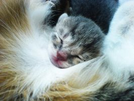 sleeping with my mummy by mariannaphotography