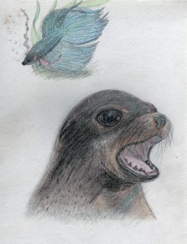 Sea Lion and Betta (Siamese Fighter) Fish by Werepyre-Queen