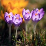First Flowers by FlorentCourty