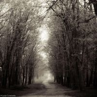 Songs from the wood by LuciaConstantin
