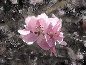 Pink blossom by ArtistMeganNicole