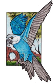 Spix Macaw - in tribute to Presley by lemurkat