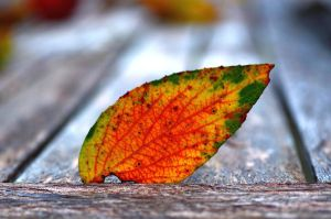autumn flame by augenweide
