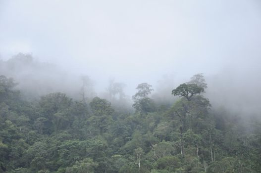 The mist and the jungle by Maaackan