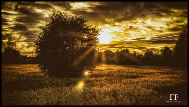 A glimpse of gold by Fionbarr