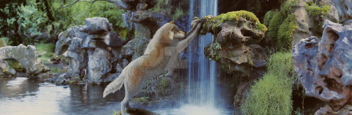 Sexy wolf and a waterfall by a-yellow-bird