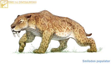 Smilodon populator by FredtheDinosaurman