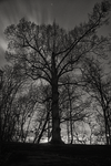 so beautiful tree by DimNevermind