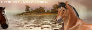 Sea Heart Banner(2) by SeaHeartStables
