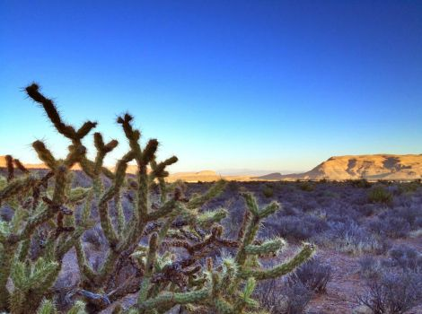 Cactus at the Red Rock Canyon by Goro56
