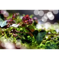 Fairyland. by OrchidFeehan