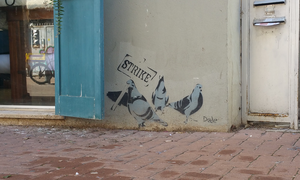 Protesting Pigeons by Dede by NeitleyW
