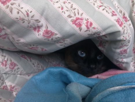 Lola in her cave by Vicmanbeleger
