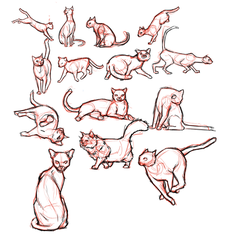 Cat studies by angryrooster