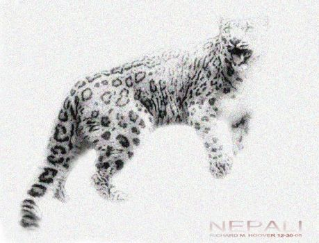 Snow Leopard by deepvision