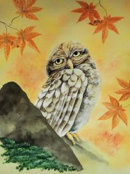 Owl in Autumn by martoo1973