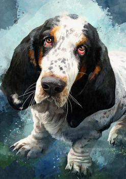 Basset Hound - Beasley by FleetingEmber