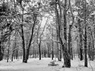 Winter forest 3 by Banjis