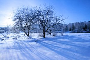 white and blue .. .. by KariLiimatainen