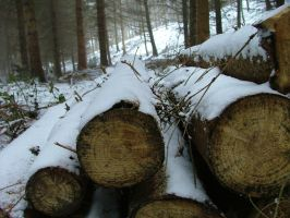 Frosty Felling by andrewcollinson