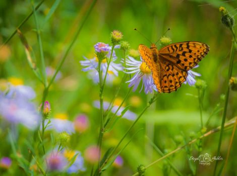 Wonders Of Nature by StephGabler