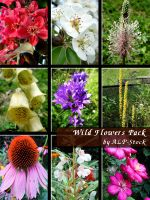 Wild Flowers Pack by ALP-Stock