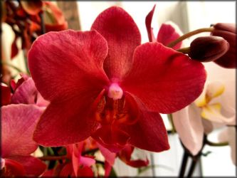 Orchid 2 by Neophytus