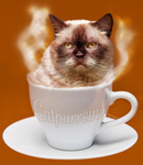 Catpuccino - Cappuccino - Digital Art by lyssagal