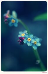 Forget me not - 3 by anjali