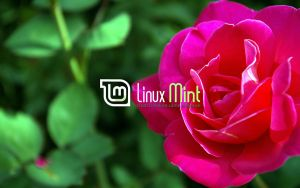 Wallpaper for Mint 38 by malvescardoso